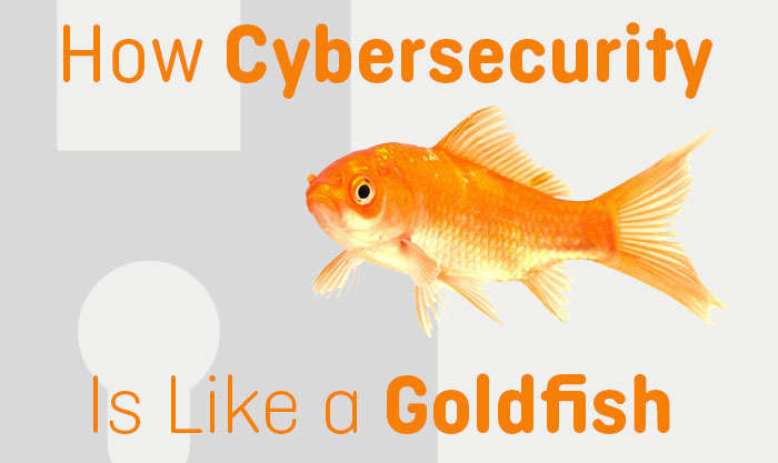 How Cybersecurity is like a Goldfish